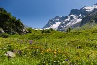 Яркое разноцветье Птыша в июле