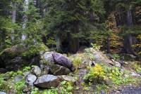 Пихты в ущелье Алибек растут прямо на скалах