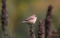 Маленькая птичка в ущелье Домбай-Ульген