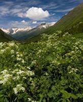 Цветущие травы в рост человека обступают тропу