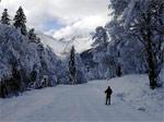 Хорошие новости: гондольная канатка заработала, снега много, даже на «лесной» трассе - фото 2