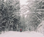 В Домбае выпало метр снега. «Шестикреселку» временами закрывают из-за погоды, можно катать по «лесной»... - фото 2